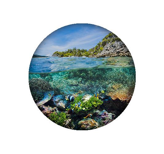 วันทะเลโลก (World Ocean Day)