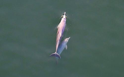 โลมาและปลาวาฬ