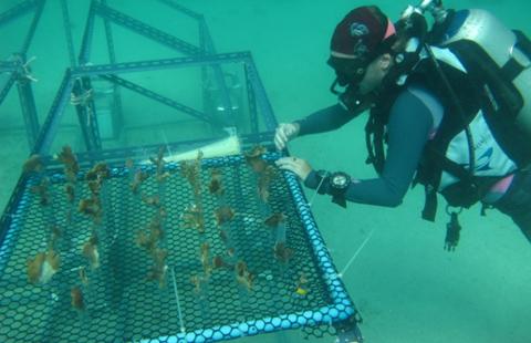 การฟื้นฟูแนวปะการัง
