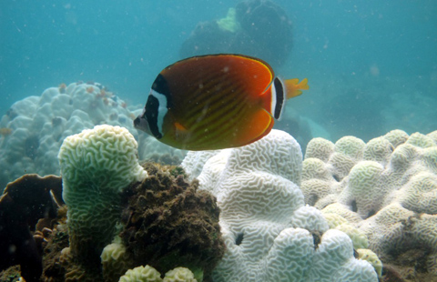 ปลาในแนวปะการัง