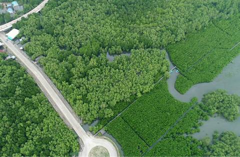การพัฒนาและส่งเสริมพื้นที่ป่าชายเลน