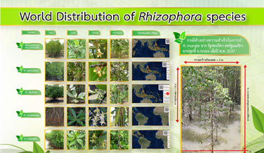 World Distribution of Rhizophora species
